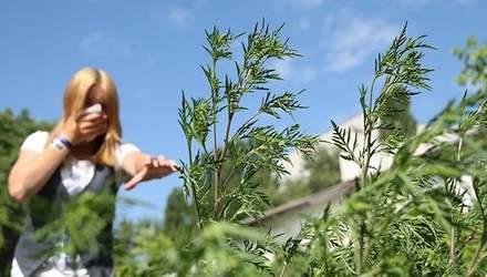 В Україні стартував сезон небезпечного алергену