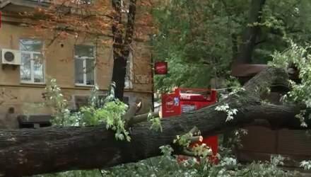 Из-за ливня в Киеве огромное дерево упало на киоски