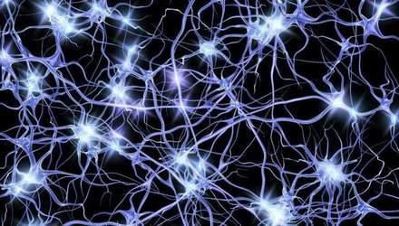 Біологи виявили новий вид нейронів