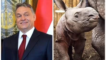 """Угорський прем'єр Орбан """"всиновив"""" носорога: у мережі обирають тварині ім'я"""