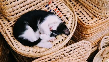 Названо ідеальний час для сну