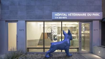 Занедбана фотостудія стала сучасною ветеринарною клінікою: досвід Монреалю