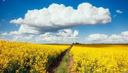 Зустріти Новий рік в Україні чи в Європі: порівняння цін