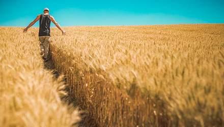 Чому фермери не хочуть, аби уряд скасував мораторій на землю
