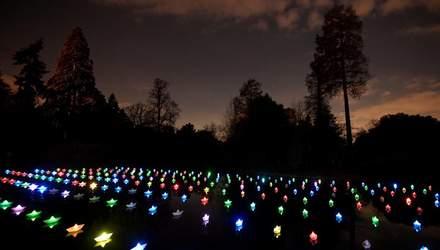Ботанічний сад Лондона засяяв святковими вогнями: захопливі фото та відео
