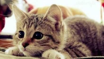 Знущання з кота у Львові: скільки загрожує кривдникам