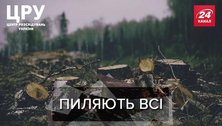 Всі знають, та нічого не роблять: як на Харківщині нахабно розкрадають десятки гектарів лісу