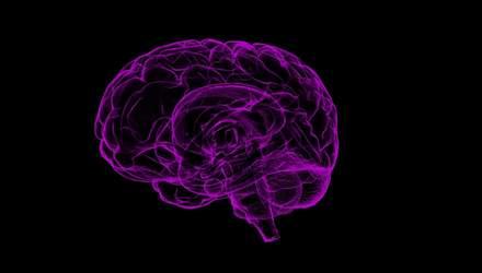 Спростували популярний міф про мозок та нервову систему