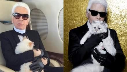 Что произойдет с кошкой Карла Лагерфельда после его смерти: неожиданные подробности