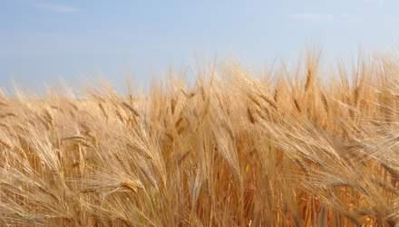 """""""Укрлендфармінг"""" заявляє, що їх посіви добре пережили зиму"""