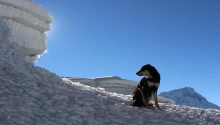 У Непалі бродячий пес приєднався до експедиції і підкорив вершину у понад 7 тисяч метрів: фото