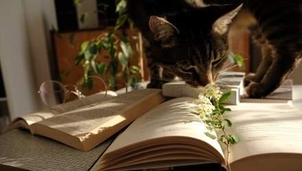 Що, як вашим психологом може бути… кіт?