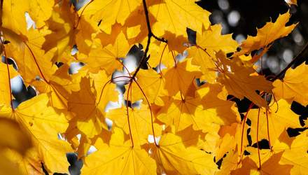 18 вересня – яке сьогодні свято та що не можна робити в цей день