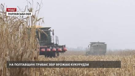 На Полтавщині триває збір врожаю кукурудзи
