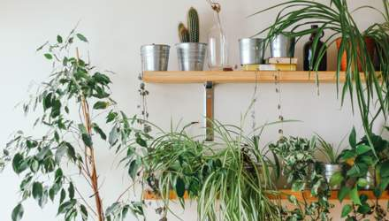 Які вазони можуть викликати алергію – небезпека домашніх рослин