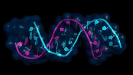 Обнаружили новый путь регуляции ДНК