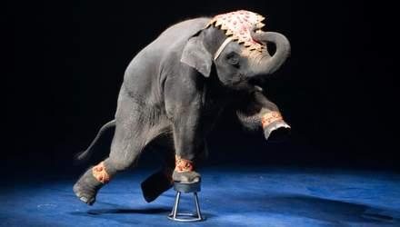Жорстокі тортури і години тренувань: чому необхідно відмовитися від тварин у цирках