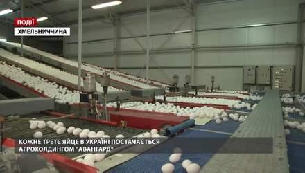 """Кожне третє яйце в Україні постачається агрохолдингом """"Авангард"""""""