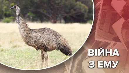 Масштабне нашестя ему в Австралії: як австралійські солдати боролися проти птахів