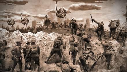Масштабное нашествие эму в Австралии: как австралийские солдаты боролись против птиц