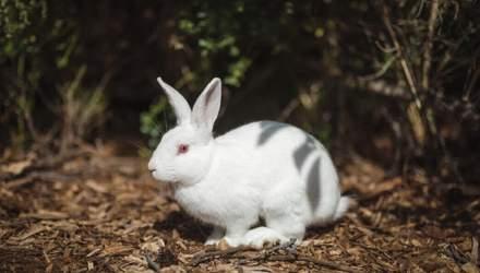 Чому потрібно відмовитися від косметики, яку тестують на тваринах