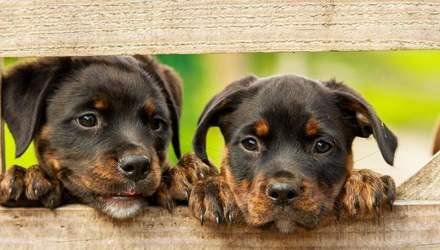 Гуманні бренди, які не тестують косметику на тваринах