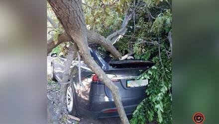 Побитий дах, вікна та фари: дерево розтрощило Tesla у Дніпрі – вражаючі фото