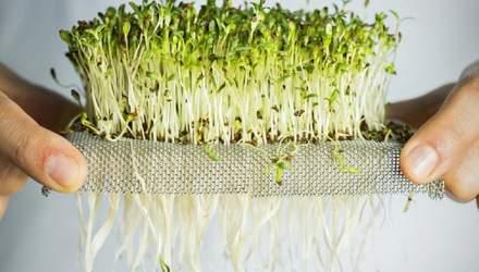 Современный суперфуд: как фермер в домашних условиях выращивает микрозелень – советы