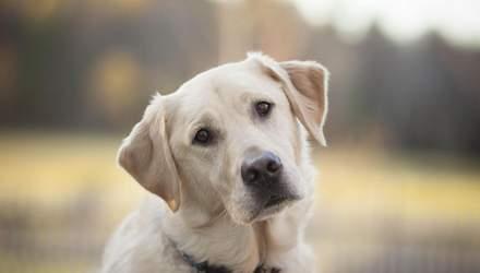 Тревожные новости: собаки подчиняются командам роботов – видео