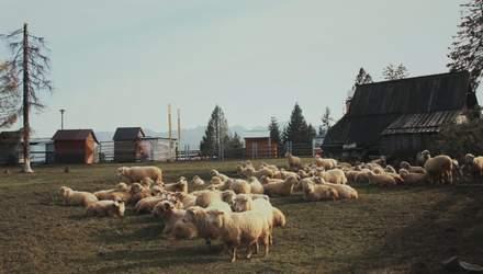 Самоизоляция и работа: уютный интерьер домашнего офиса на старой ферме – фото из Англии