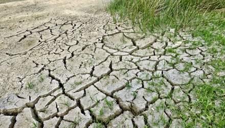 Аграрии еще не могут получить компенсации за погибший урожай