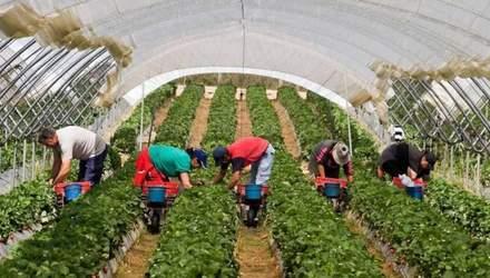 Если украинцы не вернутся, будет катастрофа, – чешский фермер