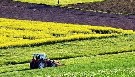 Чому чесним фермерам не варто боятися детінізації АПК