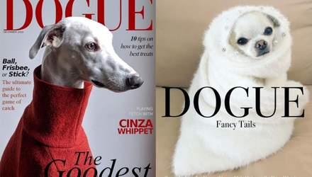 Если бы собаки были звездами журнала Dogue:  сеть захватил тренд с фото собак в стиле Vogue