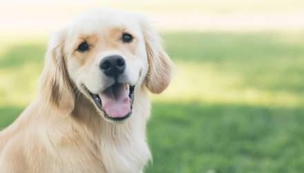 Не один за сім: науковці перераховували вік собак в людський
