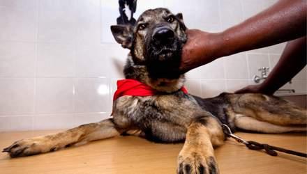 В ОАЕ поліцейські навчили собак шукати хворих на коронавірус