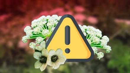 Найнебезпечніші рослини, які ростуть в Україні: інфографіка