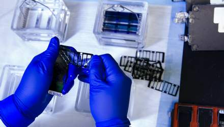 В людей з часом зникне Y-хромосома: до чого це призведе