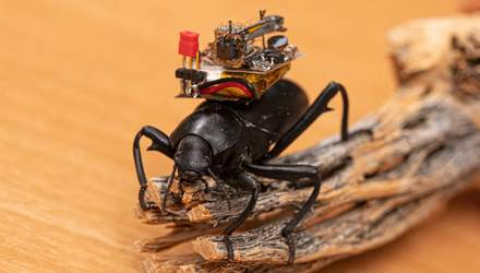 Дослідники створили відеореєстратор для жуків та побачили світ очима комах