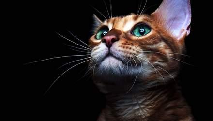 День кота в Україні: милі картинки з домашніми улюбленцями