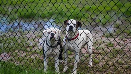 Люди могут заражать коронавирусом кошек и собак