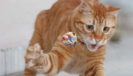 "Превзошел ""кото-Нойера"": рыжий кот стал вратарем и грациозно поймал все мячи – видео"