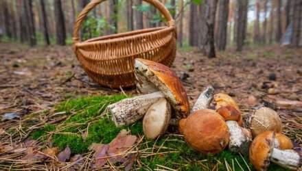 Куди поїхати на гриби під Києвом: найкращі місця осіннього сезону 2020