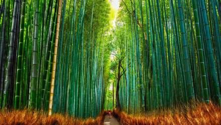 Страшно красиво: 5 таємничих лісів планети