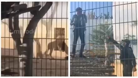 Выгоняли газом: мужчина залез в вольер со львами и не хотел выходить – видео из Одессы