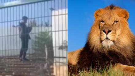 Парень ради видео залез в клетку со львами. Курьеров заблокировали в лифте – Ты смотри