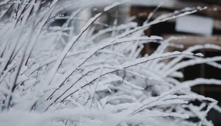 Коли в Україну прийдуть сніг та морози: що прогнозують синоптики