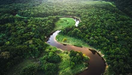 Ліси Амазонії можуть стати посушливою рівниною – їх уже не врятуєш: невтішний прогноз науковця