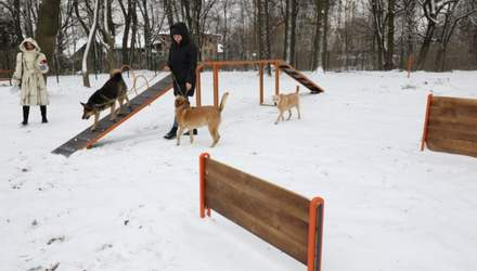 Во Львове открыли еще одну тренировочно-выгульную площадку для собак: фото