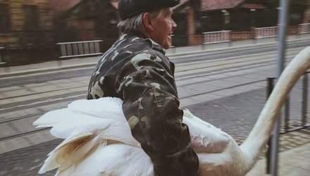 Во Львове из Стрыйского парка сбежал лебедь-шипун: его ловили посреди города – забавные фото